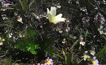 Orto Botanico Monte Baldo